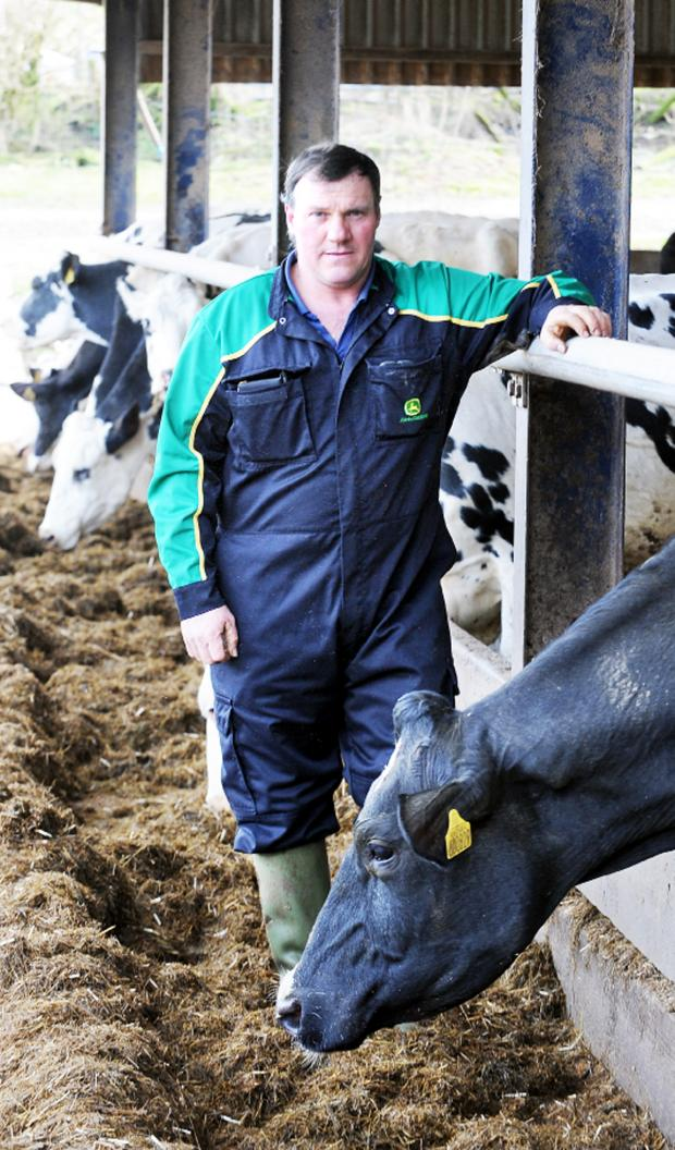 Burnley and Pendle Citizen: Farmer Paul Threlfall with one of his calving cows