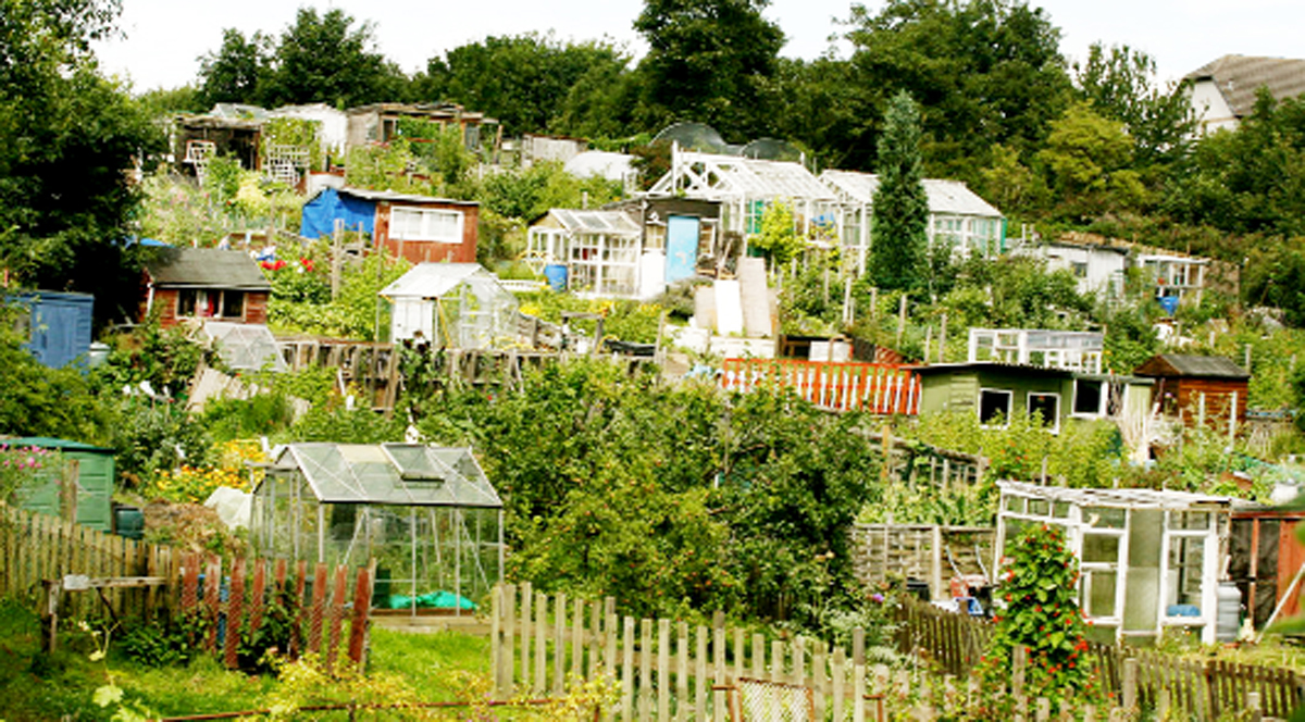 Allotment plots
