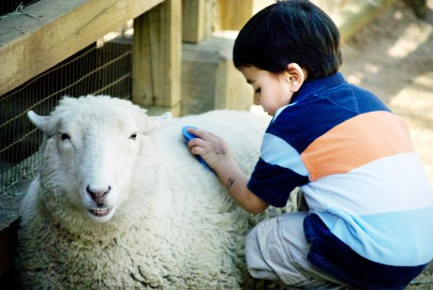Burnley and Pendle Citizen: Children enjoy petting animals at farms across East Lancashire
