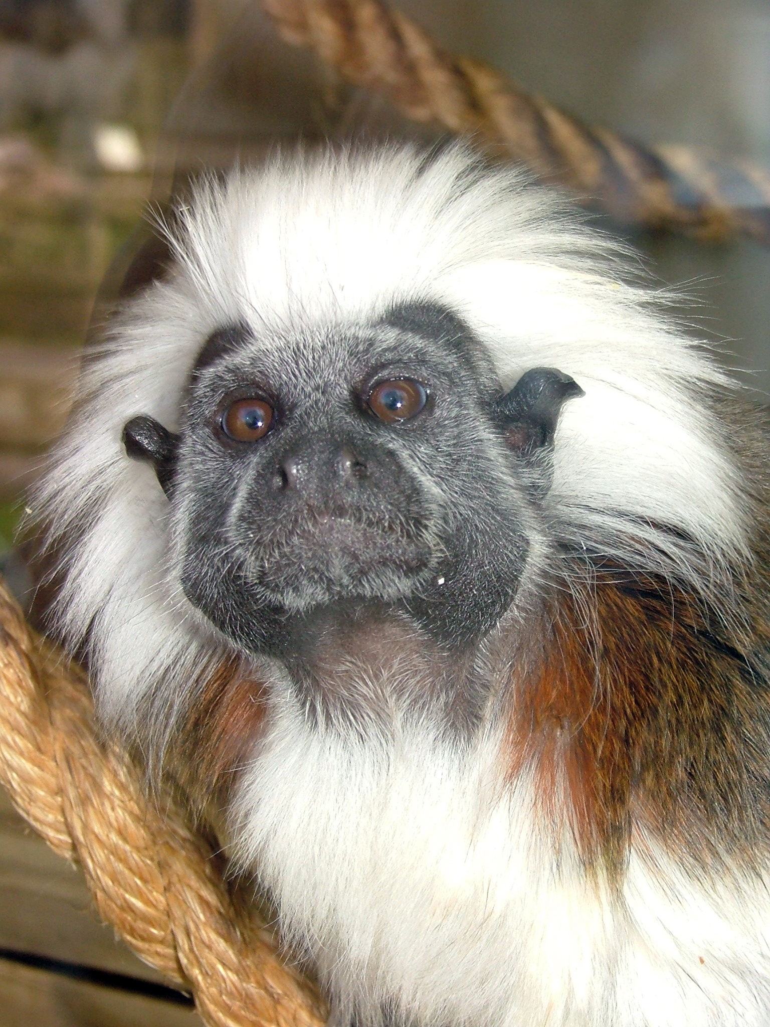 Endangered monkeys stolen from Blackpool zoo
