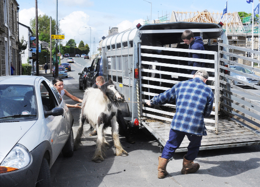 East Lancs street mayhem as horses run wild