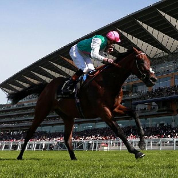 Burnley and Pendle Citizen: Kingman, pictured, finished ahead of old rival Night Of Thunder at Royal Ascot