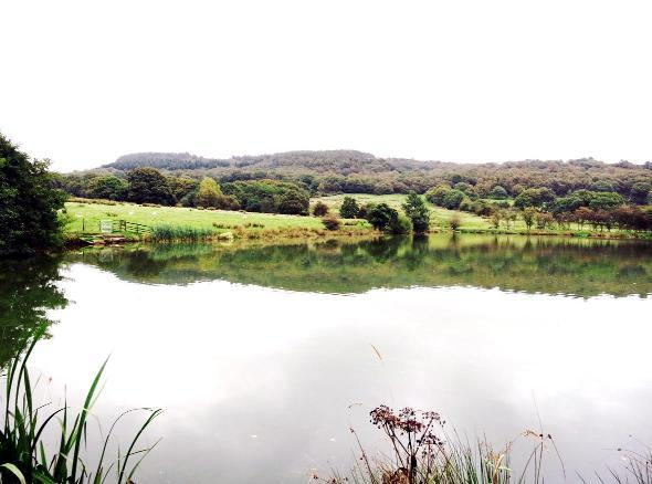 Three-acre Chorley fishing lake on sale for £40,000